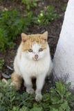 Gatto domestico che si siede sulla terra Fotografie Stock Libere da Diritti