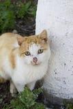 Gatto domestico che si siede sulla terra Fotografia Stock