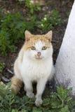 Gatto domestico che si siede sulla terra Fotografia Stock Libera da Diritti