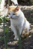 Gatto domestico che si siede sulla terra Immagine Stock