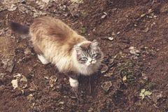 Gatto domestico favorito Fotografia Stock Libera da Diritti