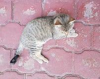 gatto domestico grigio che riposa, vista da sopra fotografie stock libere da diritti