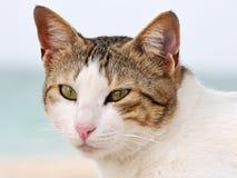 Gatto domestico a strisce grigio su fondo vago Fotografie Stock