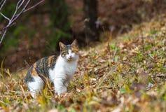 Gatto domestico variopinto nella foresta per cercare Immagine Stock Libera da Diritti