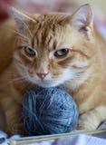 Gatto dorato con la palla blu di filato Fotografia Stock Libera da Diritti