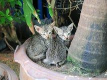 Gatto Due gattini Gatto due immagine stock