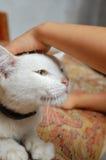 Gatto e bambino bianchi Fotografie Stock