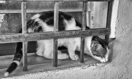 Gatto e barre Immagini Stock