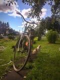 Gatto e bicicletta nel giardino Fotografia Stock Libera da Diritti