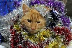 Gatto e buon anno Fotografia Stock