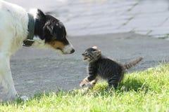 Gatto e cane Fotografie Stock Libere da Diritti