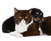 Gatto e cane. Fotografia Stock Libera da Diritti