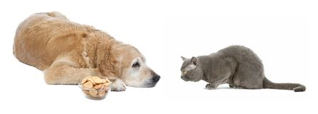 Gatto e cane Immagine Stock Libera da Diritti