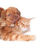 Gatto e cane Immagini Stock Libere da Diritti