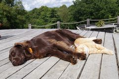 Gatto e cane Fotografia Stock Libera da Diritti