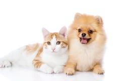gatto e cane arancio Fotografia Stock