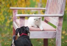 Gatto e cane che giocano sul banco in giardino Fotografie Stock Libere da Diritti