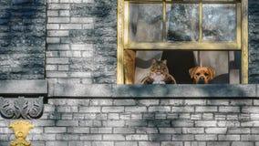 Gatto e cane che guardano dalla finestra Immagine Stock