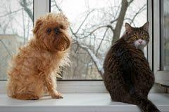 Gatto e cane che si siedono sulla finestra Fotografie Stock