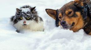 Gatto e cane che si trovano sulla neve Fotografie Stock