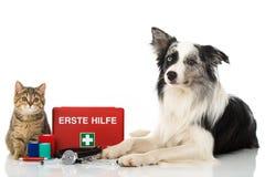 Gatto e cane con la cassetta di pronto soccorso su fondo bianco fotografia stock libera da diritti