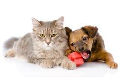 Gatto e cane con la scatola rossa Su fondo bianco Fotografie Stock