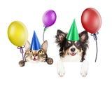 Gatto e cane del partito sopra l'insegna bianca Fotografie Stock Libere da Diritti
