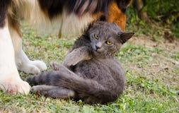 Gatto e cane divertenti Fotografia Stock