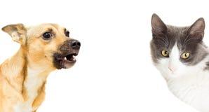 Gatto e cane divertenti Fotografie Stock