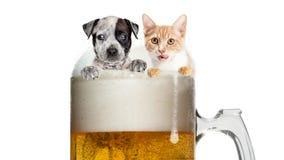 Gatto e cane divertenti in Frosty Beer Mug immagini stock libere da diritti