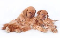Gatto e cane due Immagini Stock