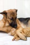 Gatto e cane insieme Fotografie Stock Libere da Diritti