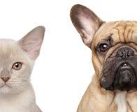 Gatto e cane, metà del ritratto del primo piano della museruola Fotografie Stock Libere da Diritti