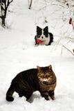 Gatto e cane nella neve Immagine Stock