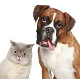 Gatto e cane, ritratto del primo piano Fotografie Stock