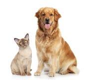Gatto e cane su una priorità bassa bianca Fotografie Stock