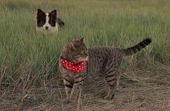 Gatto e cane sul pascolo Immagine Stock