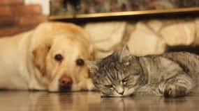 Gatto e cane sul pavimento Immagine Stock
