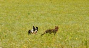 Gatto e cane sulla prateria Fotografie Stock Libere da Diritti