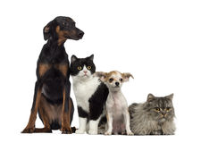 Gatto e cani Fotografia Stock Libera da Diritti