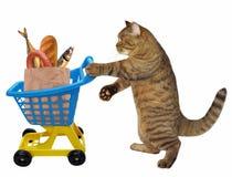 Gatto e carretto con alimento immagini stock