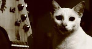 Gatto e chitarra fotografia stock