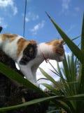 Gatto e cielo fotografie stock libere da diritti