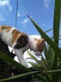 Gatto e cielo immagine stock libera da diritti