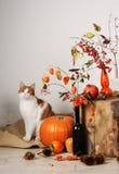 Gatto e composizione autunnale Fotografia Stock
