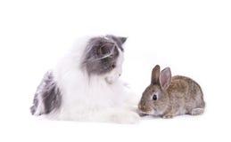 Gatto e coniglio immagini stock