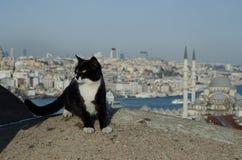 Gatto e Costantinopoli Fotografie Stock