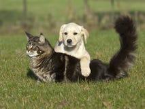 Gatto e cucciolo Fotografie Stock Libere da Diritti