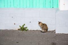 Gatto e dente di leone Fotografie Stock