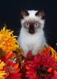 Gatto e fiori svegli Fotografia Stock